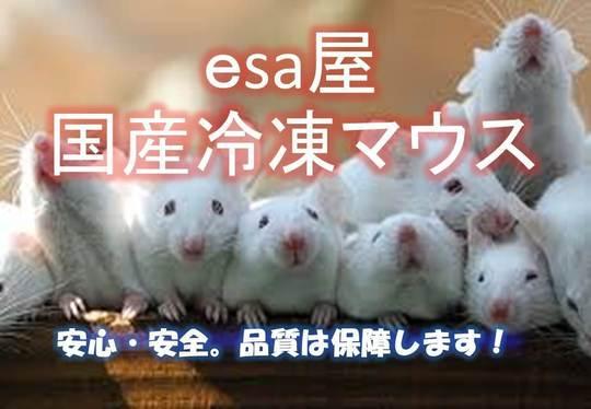 マウス と ラット の 違い